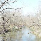 winter treesg by pcfyi