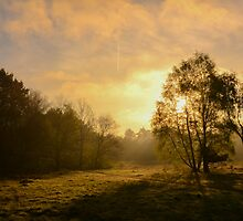 Midmorning Sun by Joey Kuipers