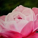 Pink Rose Macro by Antionette