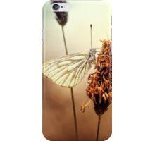 A Green-veined White (Pieris napi)...  iPhone Case/Skin