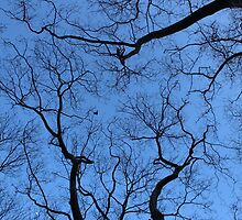 Branches by rkay