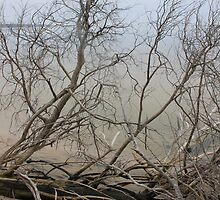 Bare Beach Trees by Elizadearg