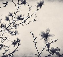 Tree Blossoms in Black and White by Kadwell