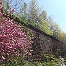 Spring Colors, Harsimus Branch Embankment, Former Pennsylvania Railroad Embankment, Jersey City, New Jersey  by lenspiro