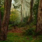 Where Bush Babies Abound - Mount Wilson , NSW - The HDR Experience by Philip Johnson