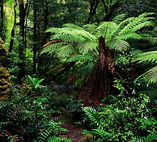Beautiful Rainforest by Angelika  Vogel