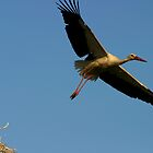 Flying Stork by Jens Helmstedt