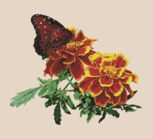Queen Butterfly on Marigold by Susan Savad
