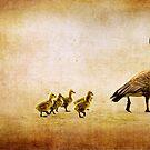 Catch Up Little Gosling by Lisa Knechtel