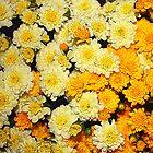 Fall Mums by AuntDot