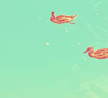 Ducks Swimmimg in the Water by iamsla