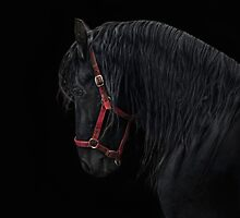Friesian Stallion by Jo-PinX