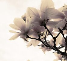 Dogwood II by Heather Reid