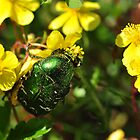 Emerald Beetle by Heather Thorsen
