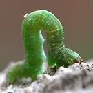 Bendy Green Caterpillar by Stuart Hogton