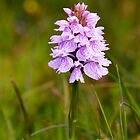 Hebridean Spotted Orchid by Kasia-D