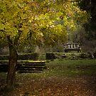 Bogong, Mt Beauty, Victoria by Margaret Metcalfe