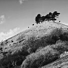 Colmers Hill -  Black and white by Vicki Field
