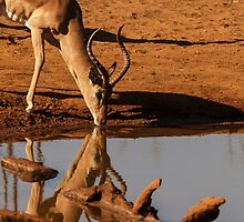 Impala reflected. by brians101
