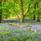 Fallen Amongst Bluebells by vivsworld