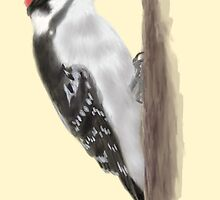 Downy Woodpecker by TLCampbell