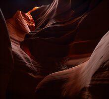 Antelope 11 by Chris Kiez