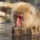 Jigokudani Snow Monkey Park, Japan Pillow by RDography