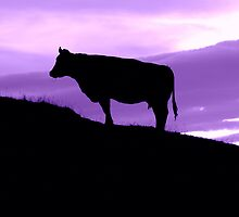 Purple Cow by mrdoomits