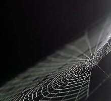 Spidery Web by mjrisenhoover
