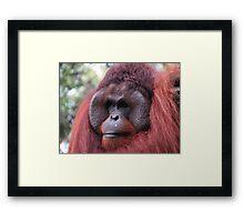 Mr.Orangutan Framed Print