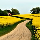 Driving through the rapeseed fields  by jchanders