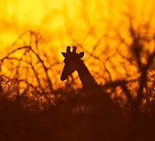 Golden silhouette giraffe by brians101