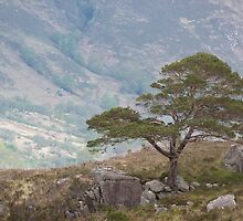 Lonesome Pine by Jennifer J Watson