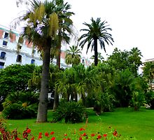 Palms And Geraniums by Fara