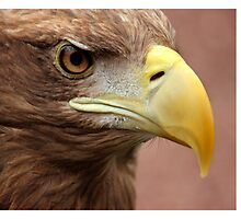 White tailed sea eagle by Elaine Carty