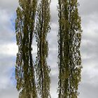 Floating trees ~  by Emma  Wertheim