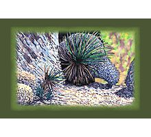 Boulders and Desert Spoons * Photographic Print
