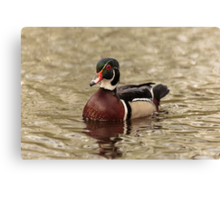 Wood Duck on a lake Canvas Print