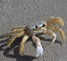 I'm a little crabby by KSKphotography