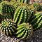 Cacti Shapes and Patterns