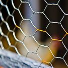 chicken wire from the chicken coop  by KSKphotography