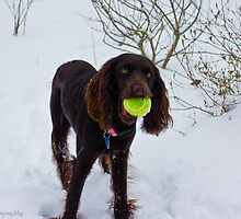 Daisy, snow and tennis ball  by KSKphotography