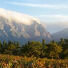 Franschoek Valley by Alan Robert Cooke