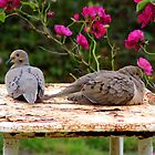 Mr and Mrs Dove by WildestArt
