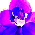 Delphinium closeup by ©The Creative  Minds