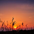 Marsh Sunset by JEZ22