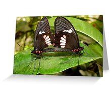 True Cattleheart Butterflies Breeding (South America) Greeting Card