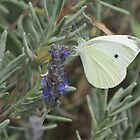 White Butterfly on Lavender by HolidayMurcia