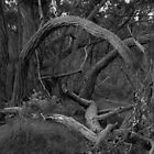 Scary Tree- Stringybark Loop Trail by Ben Loveday