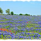Bluebonnet Time by DottieDees